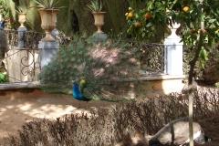 Park-in-Granada